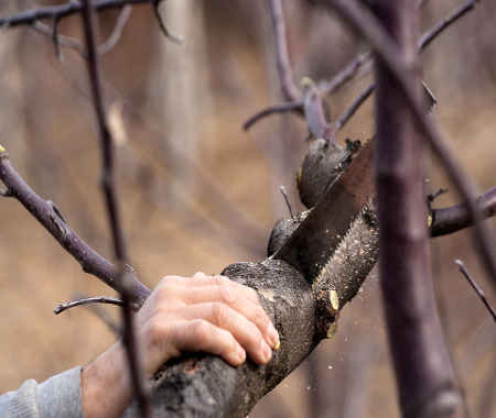 Devis coupe taille arbuste entretien jardinage Dax