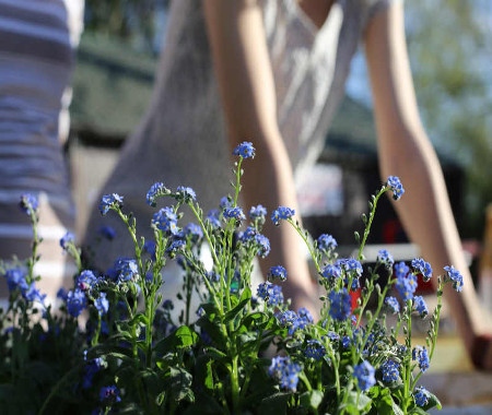 entretien de jardin Dax Landes 40