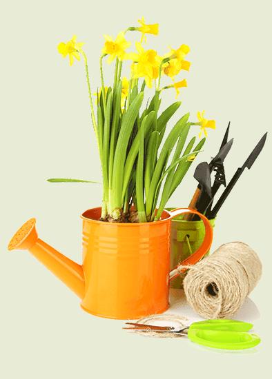 entretien jardin dax landes pas cher