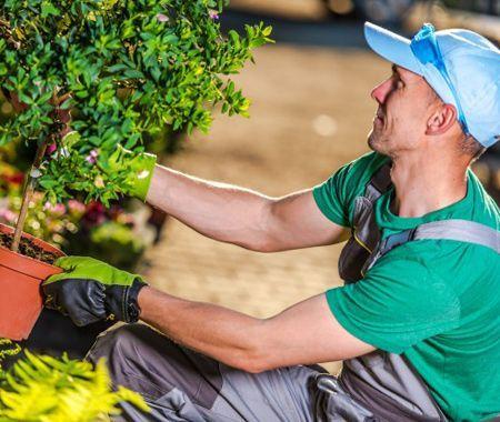 devis travaux de jardinage dax , landes Dax taille arbuste